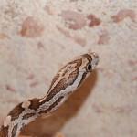 Pet shop gloucester, pet shop, reptile shop gloucester, reptile shop, snakes