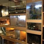 pet shop gloucester, reptile shop