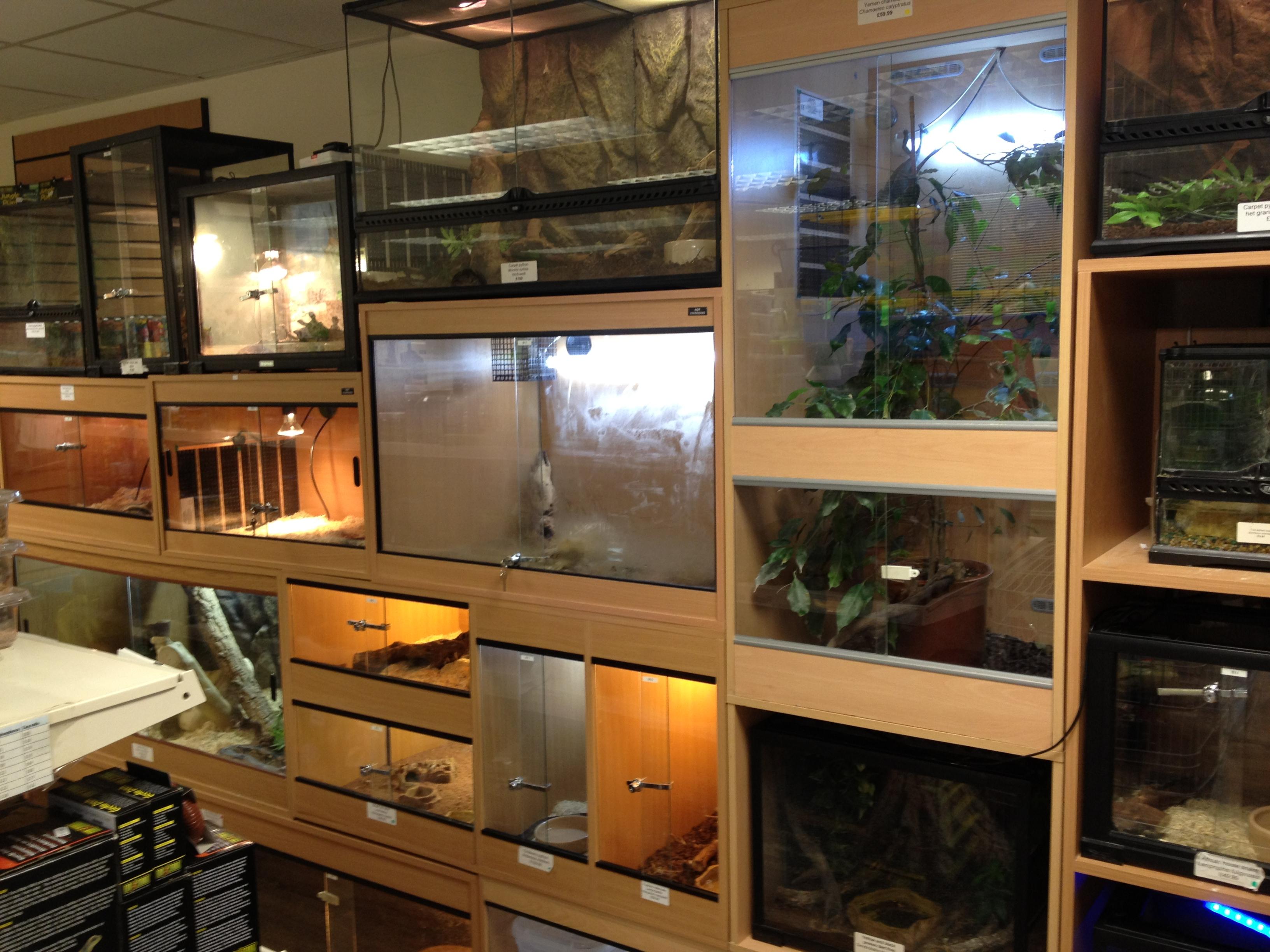 Reptiles Pets uk Pet Shop Gloucester Reptile