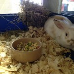 Pet shop Gloucester rabbit