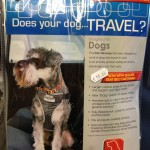 pet shop gloucester travel harness
