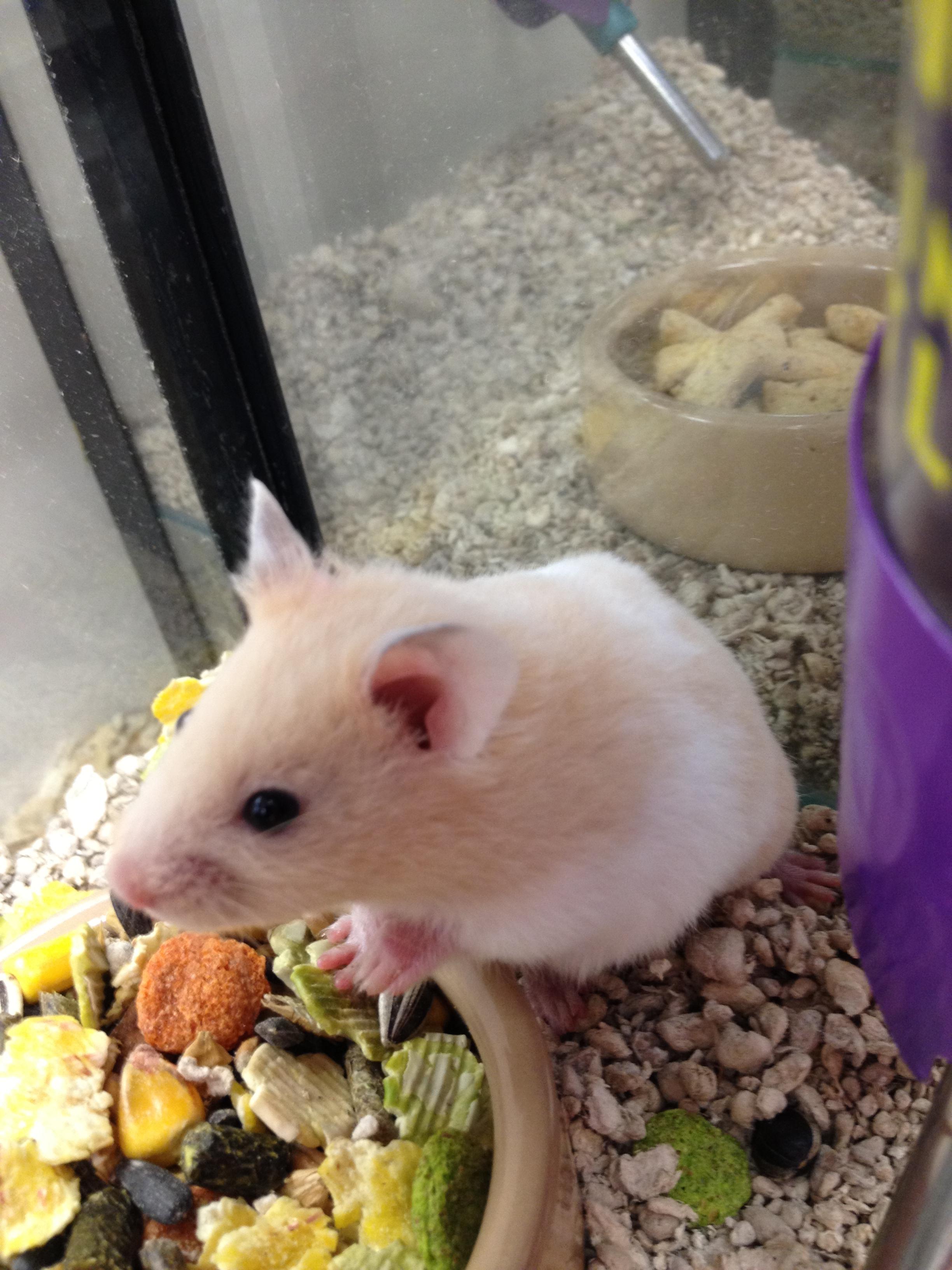 High Food Bowl Hamster