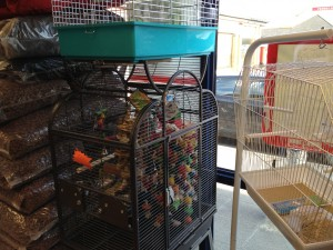 Pet shop Gloucester parrot cages