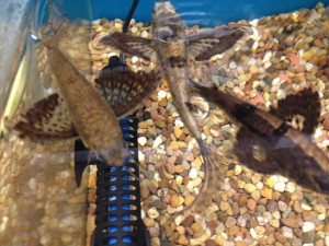 pet shop gloucester tropical fish
