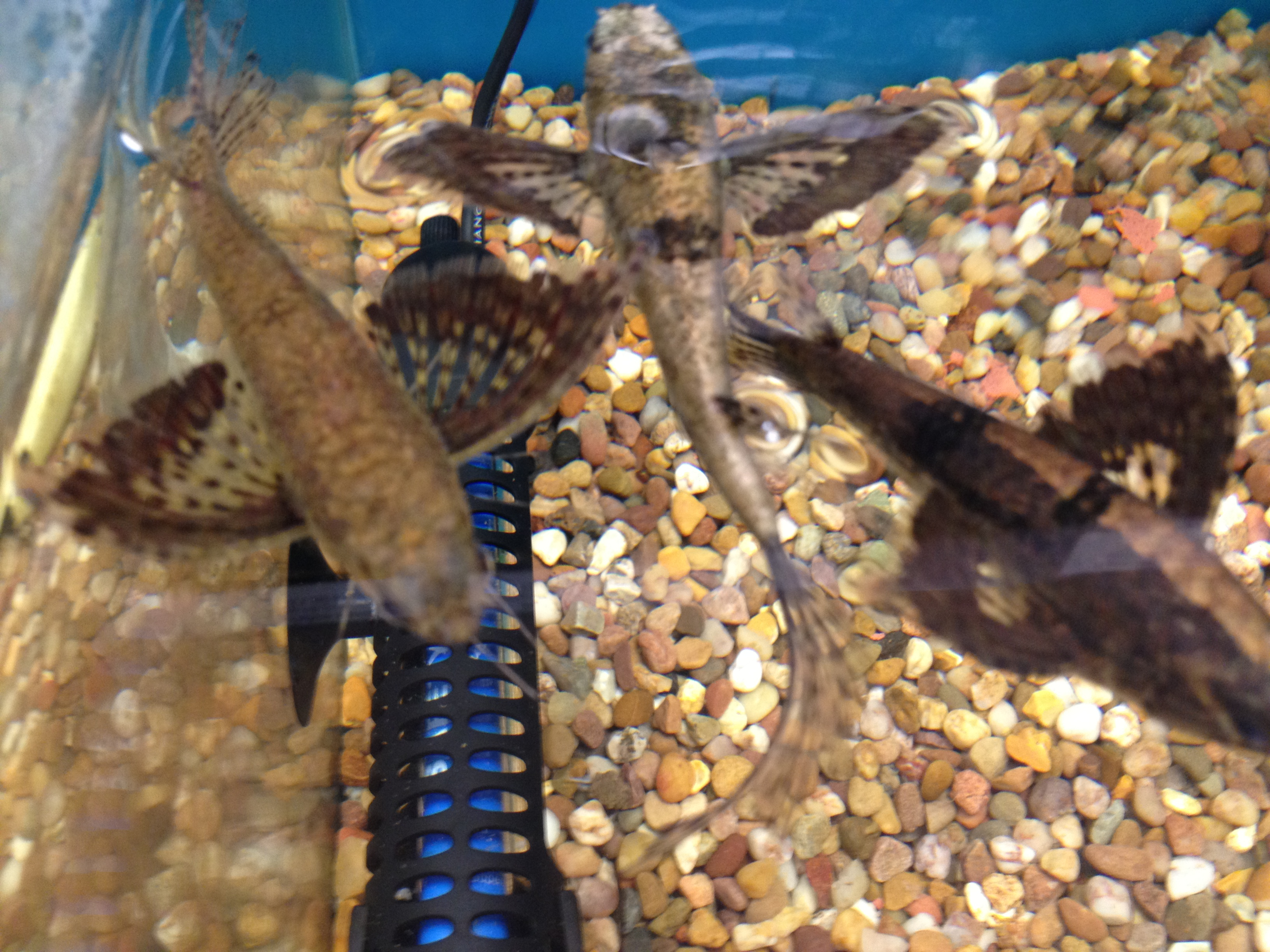 Spiders angell pets the friendliest pet shop in for Fish for pets