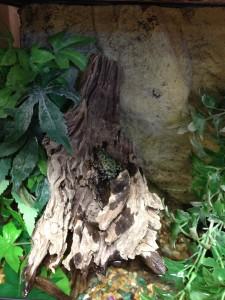 pet shop gloucester livestock fire bellied toad