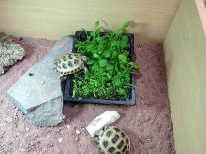 pet shop gloucester tortoise