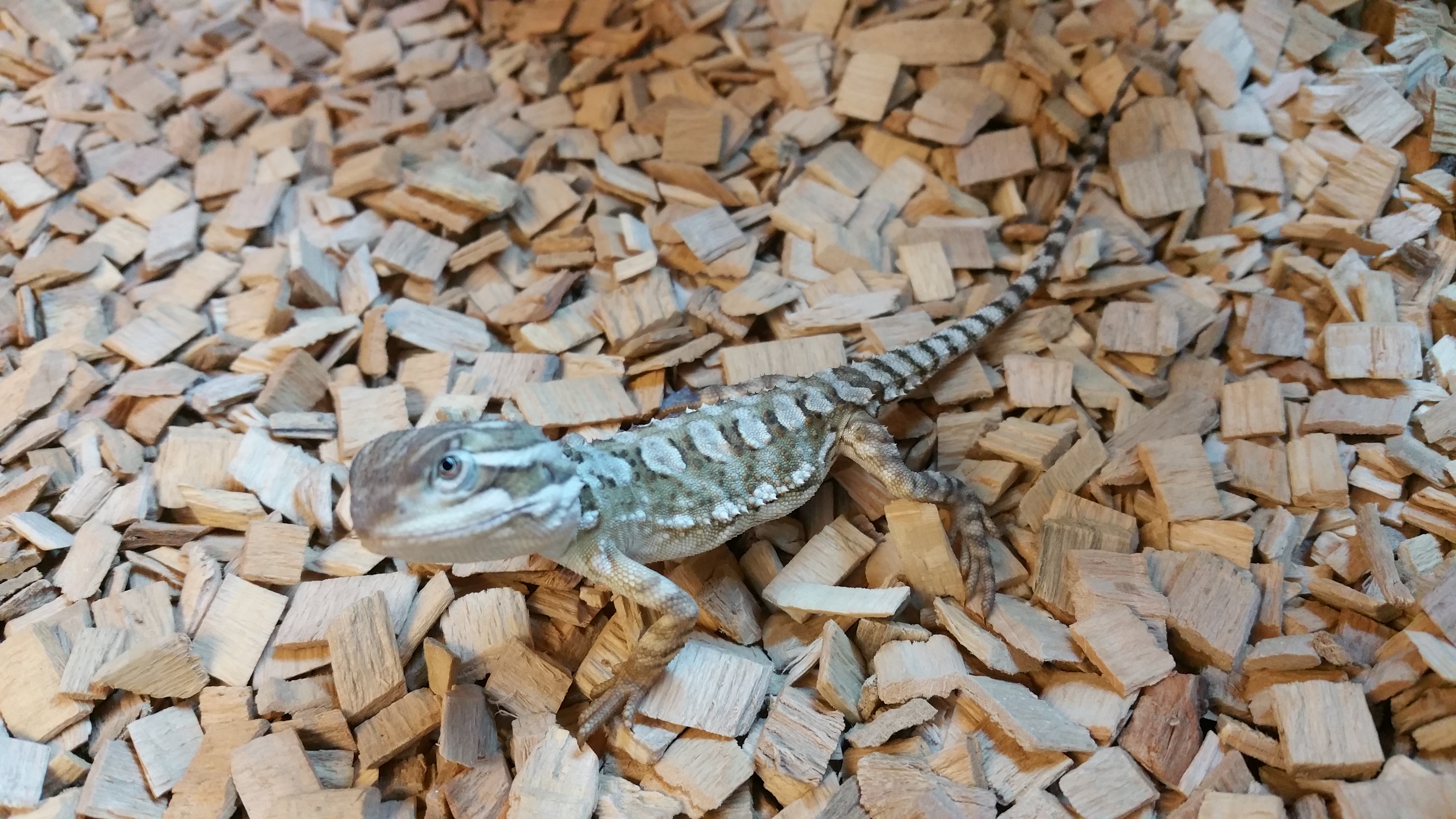 Reptiles | Angell Pets – The Friendliest Pet Shop In Gloucester
