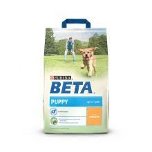 Beta Puppy