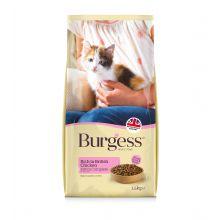 Burgess kitten